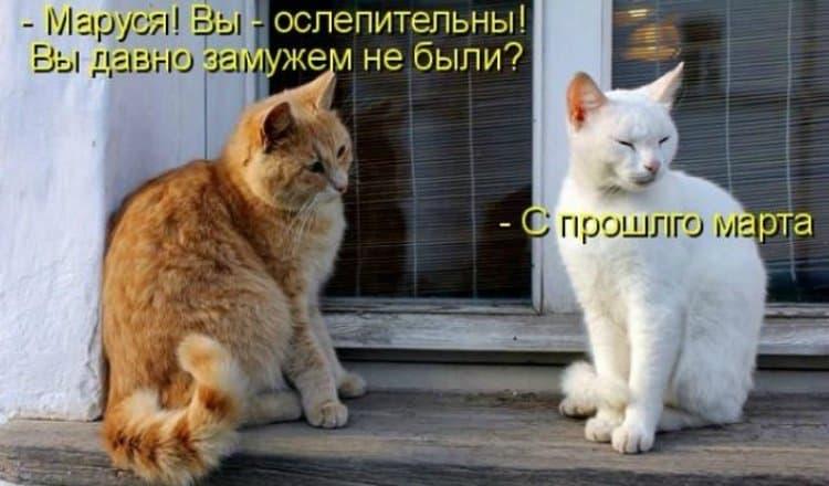 Открытки про мартовских котов с юмором