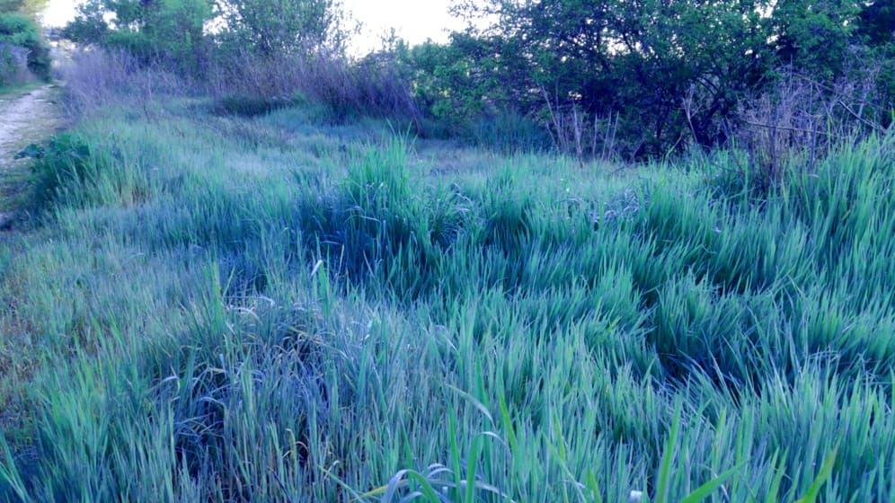 можете сделать бирюзовая трава на фото цветокоррекция так